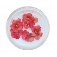 Flori uscate Rose