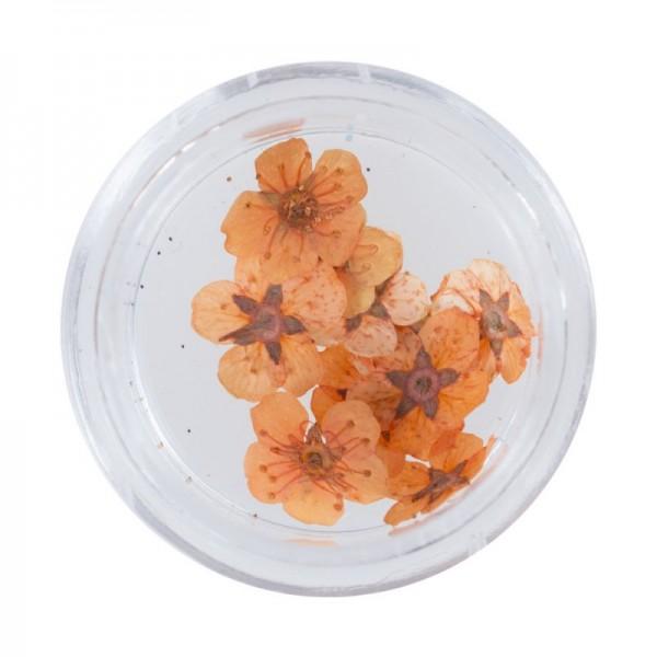 Flori uscate Orange