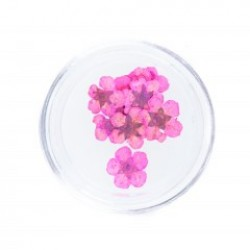 Flori uscate Pink